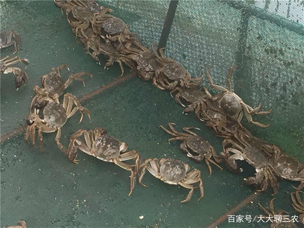 虾蟹类养殖场的规划与建造,初养者必学,值得一看