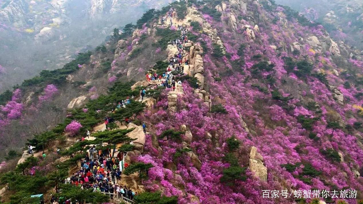大珠山风景区,每年4月,杜鹃花争相开放,浩瀚如海