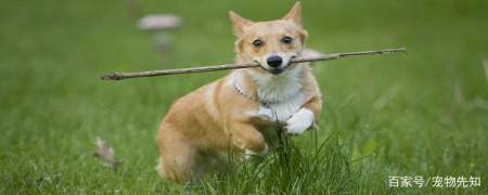 狗狗拆线后多久可以不带圈? 实用小技巧 第1张